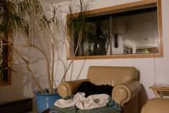 House sit in Ketchikan, AK, US