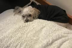 House sit in Tantallon, NS, Canada