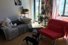 House sit in Dresden, Germany