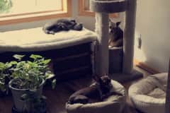 House sit in Rogers, MN, US