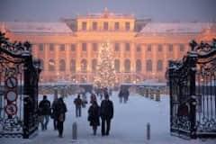 House sit in Vienna, Austria
