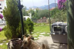 House sit in Tivat, Montenegro