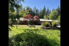 House sit in Montesano, WA, US