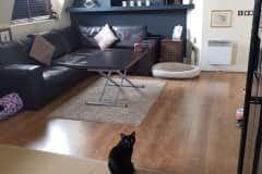 House sit in London, United Kingdom