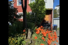 House sit in Reykjavík, Iceland