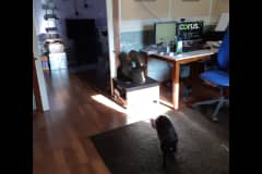 House sit in Scarborough, ON, Canada