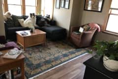 House sit in Madison, WI, US