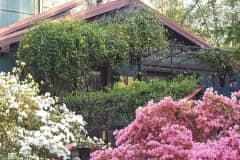 House sit in Hillsborough, NC, US