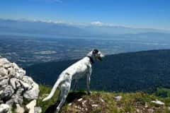 House sit in Gex, France