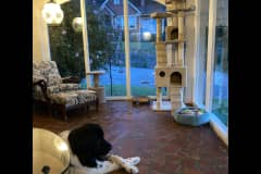 House sit in Rome, GA, US