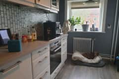 House sit in Oslo, Norway