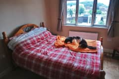 House sit in Worcester, United Kingdom