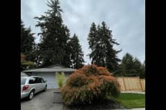 House sit in Redmond, WA, US