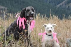 House sit in Jackson, WY, US