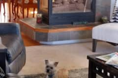 House sit in Highlands Ranch, CO, US