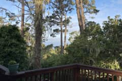 House sit in Pacific Grove, CA, US
