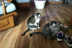 House sit in Plainfield, IN, US
