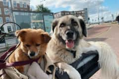 House sit in Amsterdam, Netherlands