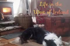 House sit in Ballinruan, Ireland