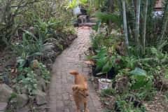 House sit in Oranjestad, Bonaire, Saint Eustatius and Saba