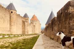 House sit in Carcassonne, France