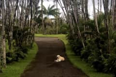 House sit in Pāhoa, HI, US