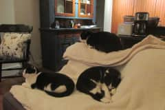 House sit in West Chester, PA, US