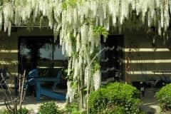 House sit in Nogaro, France