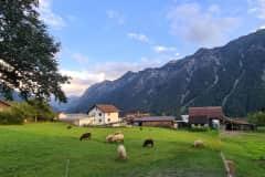 House sit in Bludenz, Austria