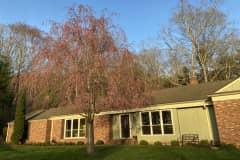 House sit in Hendersonville, NC, US