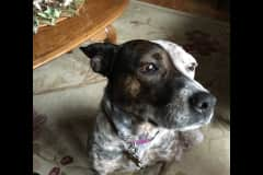 House sit in West Chester, OH, US