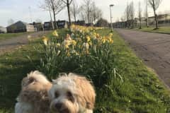 House sit in Uithoorn, Netherlands