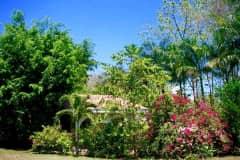 House sit in Nosara, Costa Rica
