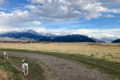 House sit in Livingston, MT, US