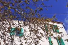 House sit in Skalokhóri, Greece