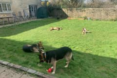 House sit in Avening, United Kingdom