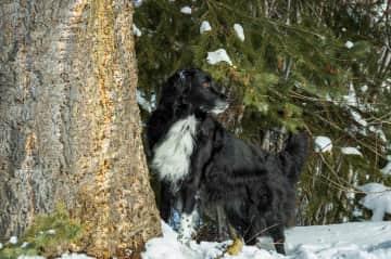 Summit (our son's dog) gorgeous Border Collie