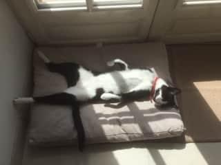 Relaxing Chuma