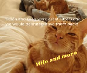 Moro and milo two sweet ginger toms