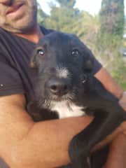 Ziggy - adorable, can be cheeky. Loves to play with Maggie