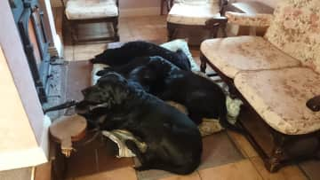 The dogs hogging the wood stove