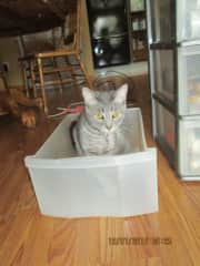 Katie checking out a box