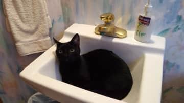 Zeke in the sink