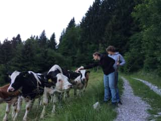 On this 10 year-old photo we are petting cows