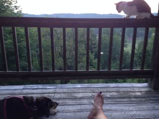 Espresso and Ginger watching the sunset with me.