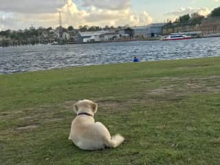 Zipper is watching Martin, who is sitting on the shore in Sydney, Australia