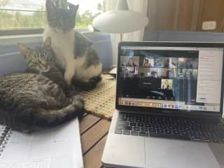 """Neblina and Azzi - they love to """"help"""" me work!"""