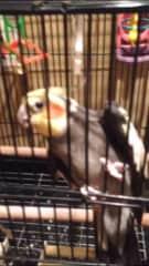 Melinda's Bird