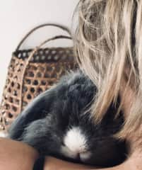 My current bun, Clara.  A rescue from the streets of Beijing.