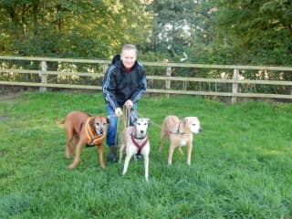 Mark with the pups in North Yorkshire 2015